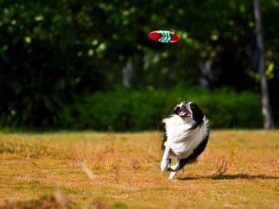 animal-animal-photography-blurred-background-2663202
