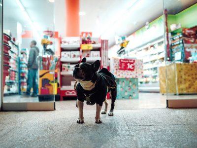 dog-friendly-shopping